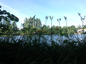 Lilies by the water